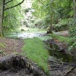 Im Nationalpark Jasmund